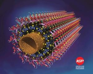 Структуры новейших биосенсоров построеных на базе микротрубок, рисунок с http://aspbs.com/jnn.html (кликните картинку для увеличения)