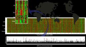На графике генетических маркеров представлены данные 255 человек из 4 континентальных регионов. С сайта http://www.nsf.gov (кликните картинку для увеличения)