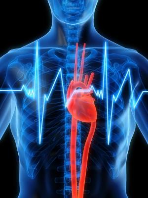 Человеческое сердце - натуральный пейсмейкер. Изображение Себастьян Каулицкий (Sebastian Kaulitzki) (кликните картинку для увеличения)