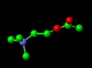 Модель молекулы ацетилхолин (кликните картинку для увеличения)