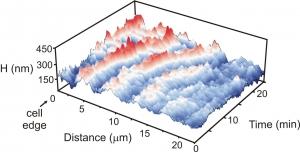 Поверхностные волны биологических клеток (кликните картинку для увеличения)