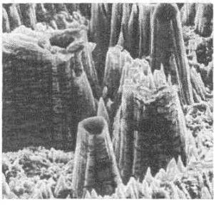 Изображение некой поверхности, полученное при помощи электронного микроскопа. (кликните картинку для увеличения)