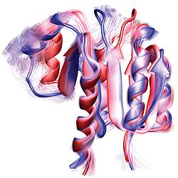 Водородная связь способствует конформационному переключению между неактивными (синий) и активными (красный) состояниями белка.