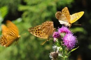 Полученные результаты поясняют, каким образом, казалось бы, небольшие по размеру насекомые преодолевают большие расстояния в короткие сроки. (кликните картинку для увеличения)