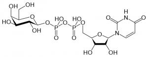 Схема строения одной молекулы УДФ-галактозы. (кликните картинку для увеличения)