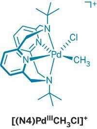 Структура нового катализатора на основе Pd(III)