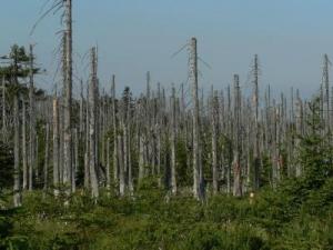 Леса, уничтоженные кислотными дождями, которые содержат коррозийные компоненты, возможно, образовавшиеся в результате распада химикатов, представленных в качестве безвредных для озонового слоя (кликните картинку для увеличения)
