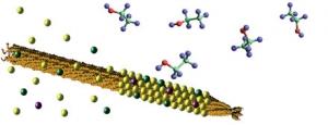 Бактериофаг M13 (оранжевый цвет) связывает церий (желтый), никель (зеленый) и родий (фиолетовый) создавая нанокристаллический катализатор риформинга этанола (показан в виде шаров и палочек) в водород. (кликните картинку для увеличения)