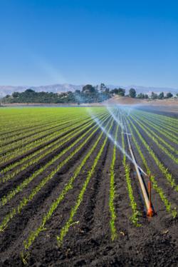 Эксперименты с различными типами почвы позволят оптимизировать расход ресурсов (в том числе воды) в сельском хозяйстве.