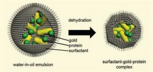 Приготовление комплекса ПАВ/белок/золотой наностержень. (кликните картинку для увеличения)