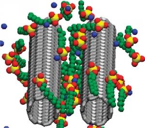 Визуализация проведенного вычислительного эксперимента: молекулы поверхностно-активного вещества адсорбированы на поверхности одностенной углеродной нанотрубки. (кликните картинку для увеличения)