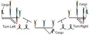 Графическое изображение принципов программирования перемещений созданного молекулярного робота. (кликните картинку для увеличения)
