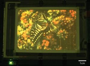 Исследователи представили 4-дюймовую полноцветную матрицу с разрешением 320 на 240 пикселей, принцип работы которой основан на квантовых точках. (кликните картинку для увеличения)