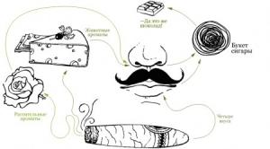 Обоняние - это сложный, не до конца изученный процесс, позволяющий воспринимать многообразие запахов окружающего мира. (кликните картинку для увеличения)