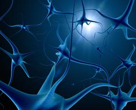 На рисунке представлена модель сети нейронов головного мозга.
