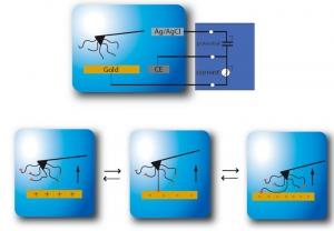 Схематическое изображение взаимодействий между молекулой полимера и поверхностью электрода. (кликните картинку для увеличения)
