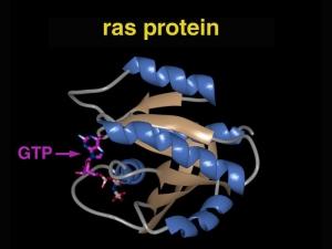 3D-модель строения белка Ras. (кликните картинку для увеличения)