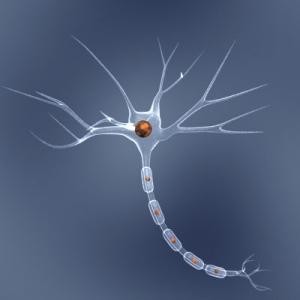 Модель строения нейрона головного мозга. (кликните картинку для увеличения)
