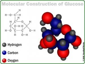 Модель строения молекулы глюкозы. (кликните картинку для увеличения)