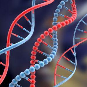 ДНК – универсальный источник информации об устройстве и функционировании организма.