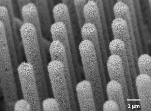 Нанопровода нитрида иридия галлия, выращенные на массиве кремниевых проводов. (кликните картинку для увеличения)