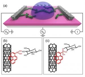 Схематическое изображение одной из тысяч электронных схем на основе нанотрубок, а также принципа присоединения к УНТ молекул пирена борной кислоты и глюкозы. (кликните картинку для увеличения)