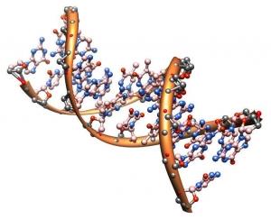 Молекула ДНК. (кликните картинку для увеличения)