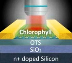 Схематическое изображение конструкции созданного фототранзистора. (кликните картинку для увеличения)
