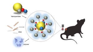 Схема эксперимента по доставке лекарственных препаратов к опухоли при помощи суперструктуры, состоящей из наночастиц золота и молекул ДНК. (кликните картинку для увеличения)