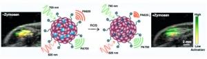 Полупроводниковые полимерные наночастицы могут использоваться для визуализации активных форм кислорода. (кликните картинку для увеличения)