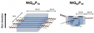 Учёные прибегли к экспериментам с нейтронным рассеянием, чтобы выявить структурные различия между нормальной (слева) и атипичной (справа) формой хантингтиновых агрегатов. Хантингтины атипичной формы вовлечены в развитие болезни Хантингтона. (кликните картинку для увеличения)
