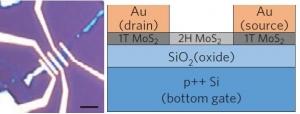 Схематическое изображение предложенной структуры контакта. (кликните картинку для увеличения)