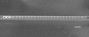Изображение алмазного фотонного кристалла, содержащего азот-вакансии, полученное при помощи сканирующего туннельного микроскопа. (кликните картинку для увеличения)